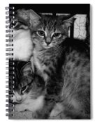 Kittens Corner Spiral Notebook