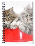 Kittens In A Food Bowl Spiral Notebook