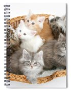 Kittens In Basket Spiral Notebook