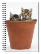 Kittens In Flowerpot Spiral Notebook