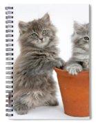 Kittens In Pot Spiral Notebook