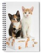 Kittens On Birthday Package Spiral Notebook