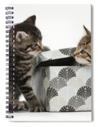 Kittens Playing With Box Spiral Notebook