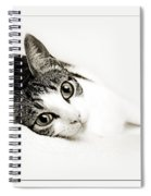 Kitty Cat Greeting Card Get Well Soon Spiral Notebook