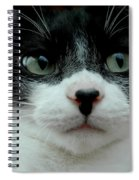 Kitty Closeup Spiral Notebook