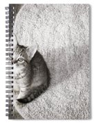 Kitty's Shadow Spiral Notebook