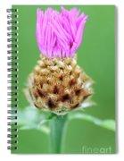 Knapweed Flower Spiral Notebook