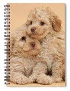 Labradoodle Puppies Spiral Notebook