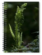 Lacy Wild Alabama Fern Spiral Notebook