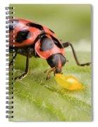 Lady Beetle Eats Potato Beetle Eggs Spiral Notebook