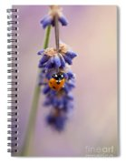 Ladybird And Lavender Spiral Notebook
