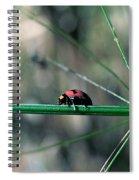 Ladybird Spiral Notebook