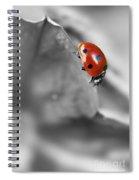 Ladybird On Leaf 1.0 Spiral Notebook