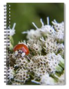 Ladybug Atop The Flowers Spiral Notebook
