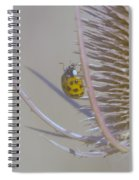 Ladybug Croosing The Prickles  Spiral Notebook