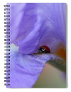 Ladybug On Iris Spiral Notebook