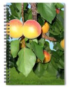 Lake Country Apricots Spiral Notebook