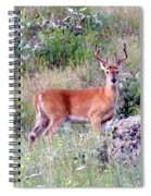 Lake Country Buck Spiral Notebook
