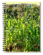 Lake Country Corn Spiral Notebook