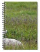 Lamb In Pasture, Alberta, Canada Spiral Notebook