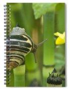 Land Snail 5698 Spiral Notebook
