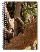 Langurs Sariska Spiral Notebook