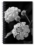 Lantana In Black And White Spiral Notebook