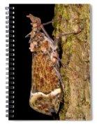 Lantern Fly Spiral Notebook