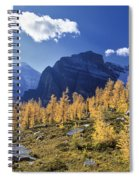 Larch Trees From The Saddleback Trail Spiral Notebook