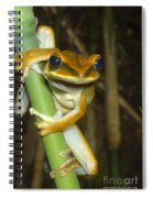 Large Arboreal Hylid Frog Spiral Notebook
