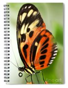 Large Tiger Butterfly Spiral Notebook