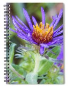 late Summer Fleabane Spiral Notebook