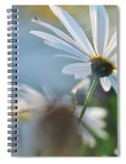 Late Sunshine On Daisies Spiral Notebook