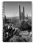 Late Winter Desert Spiral Notebook