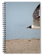 Laughing Gull In Flight Spiral Notebook