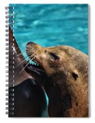 Laughing Seals Spiral Notebook