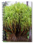 Lauhala Tree Spiral Notebook