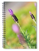 Lavender In The Sun Spiral Notebook