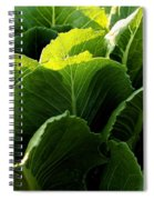 Layers Of Romaine Spiral Notebook