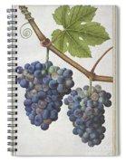 Le Moyne: Grape Vine, C1585 Spiral Notebook