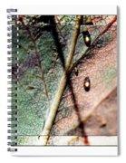 Leaf After Rain Spiral Notebook
