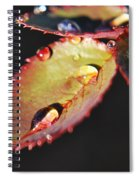 Leaf And Dew Drops Spiral Notebook