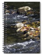 Leaf Collection Spiral Notebook