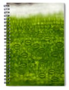 Leaf Stomata, Lm Spiral Notebook