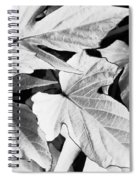Leaf Study In Black And White Spiral Notebook