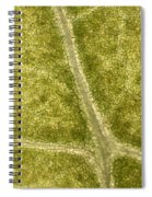 Leaf Vascularization Spiral Notebook