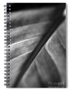 Leaf Venation   Spiral Notebook