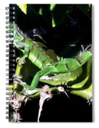 Leapin Lizards Spiral Notebook