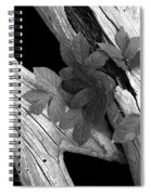 Leaves And Driftwood Bw Spiral Notebook