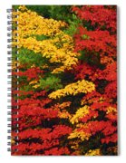 Leaves On Trees Changing Colour Spiral Notebook